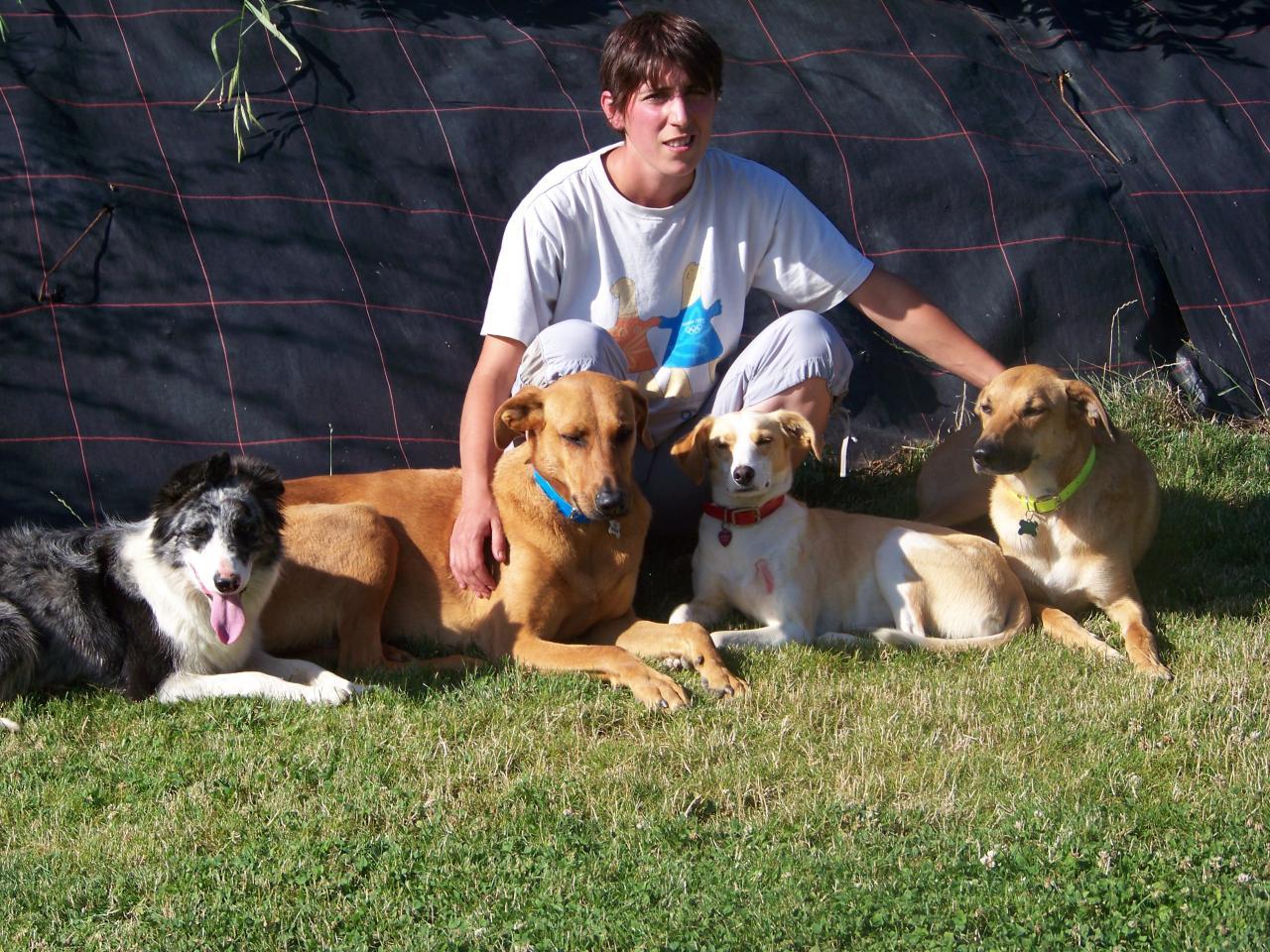 pension canine éducation rhône dressage stage chien de