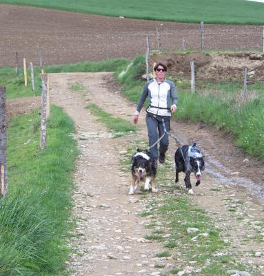 Cani marche 1